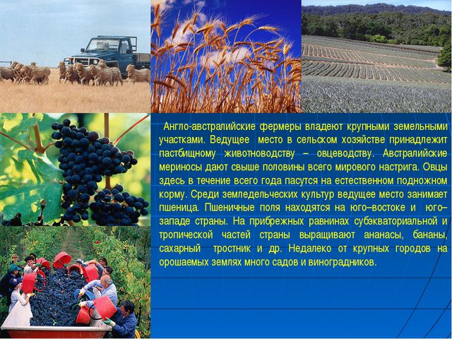 Англо-австралийские фермеры владеют крупными земельными участками. Ведущее м...