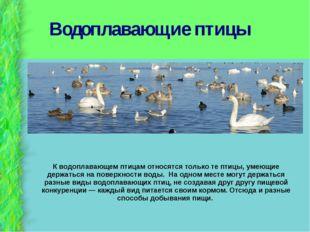 Водоплавающие птицы К водоплавающем птицам относятся только те птицы, умеющие