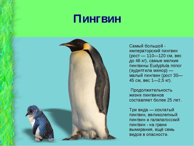 Пингвин Самый большой - императорский пингвин (рост — 110—120 см, вес до 46 к...