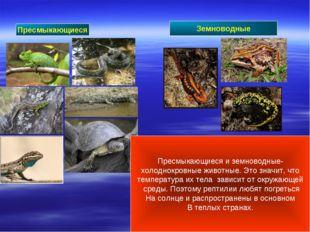 Пресмыкающиеся Земноводные Пресмыкающиеся и земноводные- холоднокровные живот