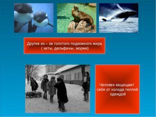 Другие из – за толстого подкожного жира ( киты, дельфины, моржи) Человек защи