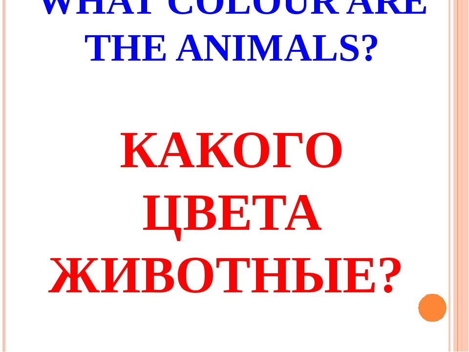 WHAT COLOUR ARE THE ANIMALS? КАКОГО ЦВЕТА ЖИВОТНЫЕ?