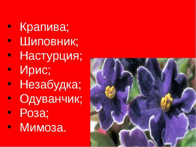 Крапива; Шиповник; Настурция; Ирис; Незабудка; Одуванчик; Роза; Мимоза.