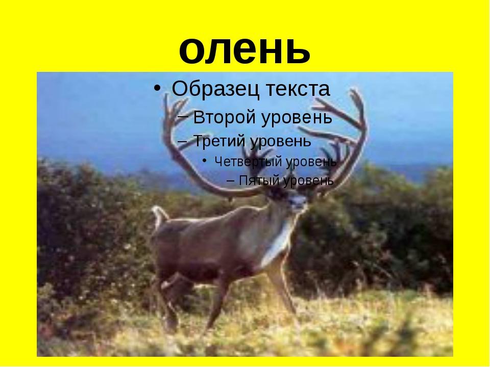 олень