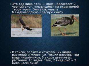 Это два вида птиц — орлан-белохвост и черный аист, гнездящиеся на охраняемой