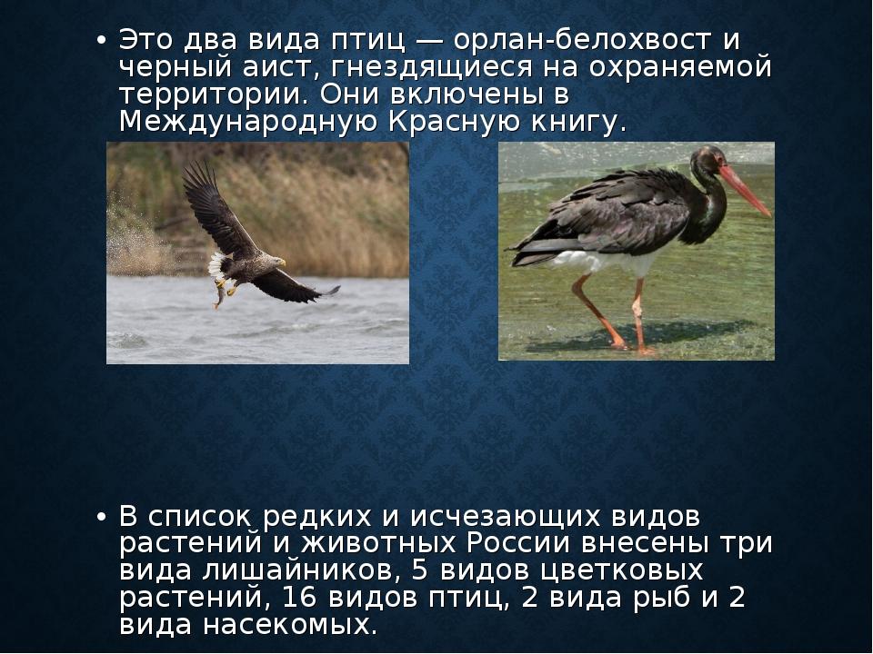 Это два вида птиц — орлан-белохвост и черный аист, гнездящиеся на охраняемой...