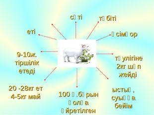 еті сүті 9-10ж. тіршілік етеді 20 -28кг ет 4-5кг май ыстық, суыққа бейім тәул