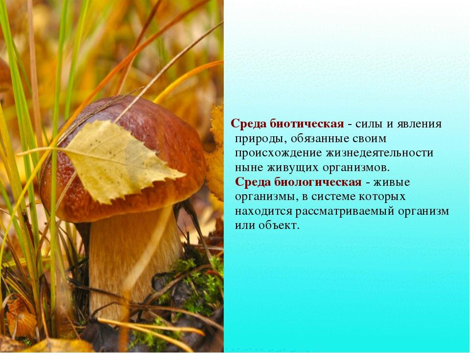 Среда биотическая- силы и явления природы, обязанные своим происхождение жи...