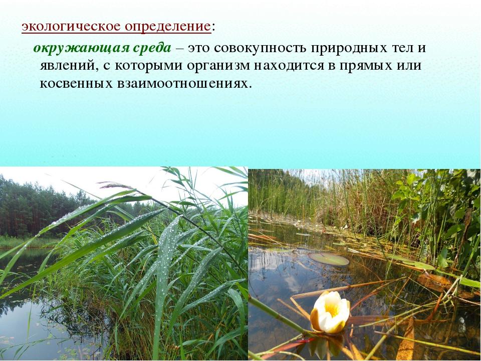 экологическое определение: окружающая среда – это совокупность природных тел...
