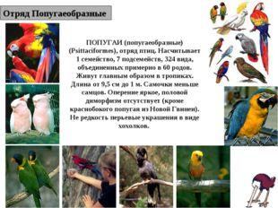 Отряд Попугаеобразные ПОПУГАИ (попугаеобразные) (Psittaciformes), отряд птиц.