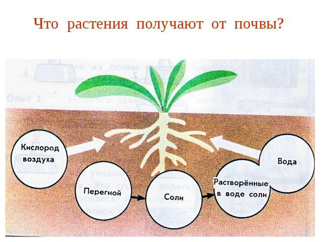 Что растения получают от почвы?
