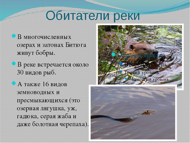 Обитатели реки В многочисленных озерах и затонах Битюга живут бобры. В реке в...