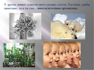 У других живых существ много разных клеток. Растения, грибы, животные, да и т