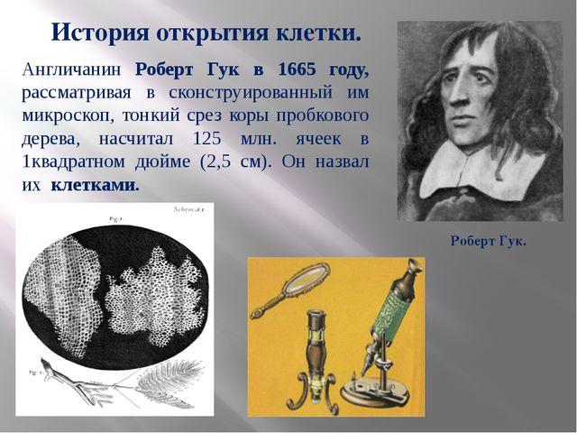 Роберт Гук. История открытия клетки. Англичанин Роберт Гук в 1665 году, расс...