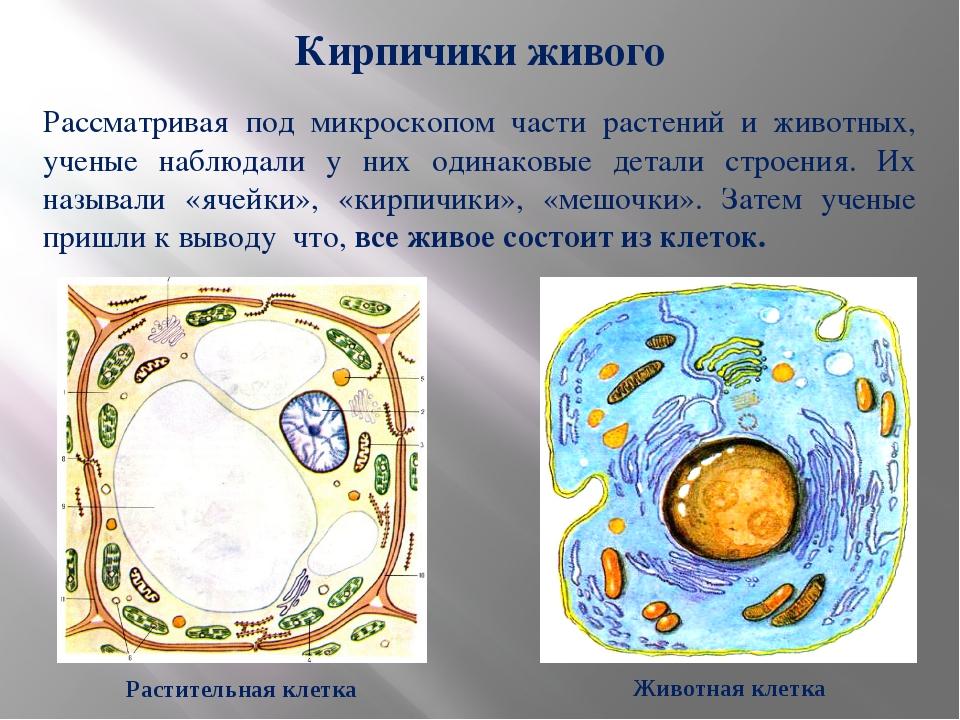 Рассматривая под микроскопом части растений и животных, ученые наблюдали у ни...