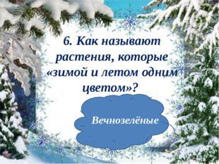 6. Как называют растения, которые «зимойи летом одним цветом»? Вечнозелёные