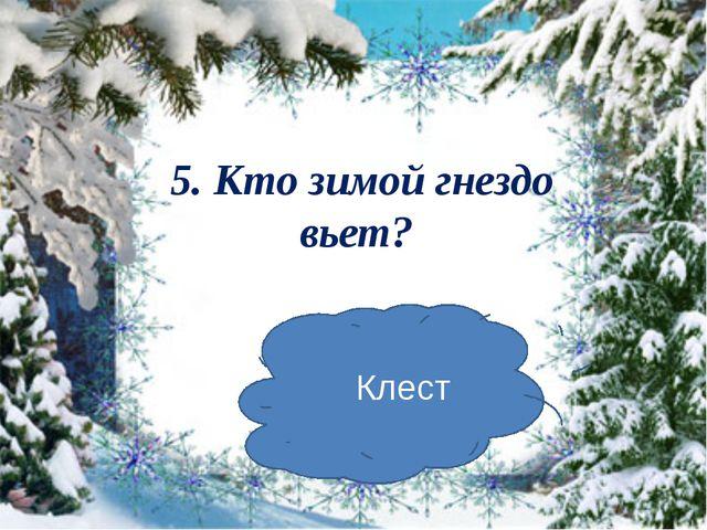 5. Кто зимой гнездо вьет? Клест