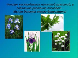 Человек наслаждается минутной красотой, а сорванное растение погибает. Мы не