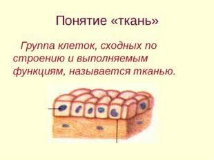 Понятие «ткань» Группа клеток, сходных по строению и выполняемым функциям, на