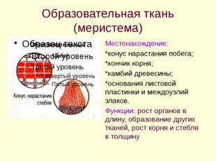 Образовательная ткань (меристема) Местонахождение: *конус нарастания побега;