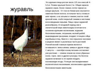 журавль Это крупная птица ростом около 125 см и массой 4–5,5 кг. Размах крыл
