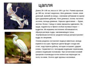 цапля Длина 28–140 см, масса от 100 г до 4 кг. Размах крыльев до 180 см, лета