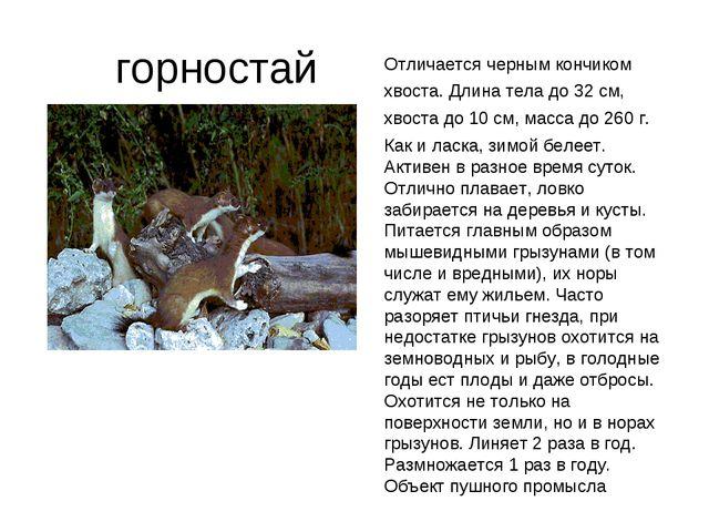 горностай Отличается черным кончиком хвоста. Длина тела до 32 см, хвоста до...