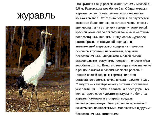 журавль Это крупная птица ростом около 125 см и массой 4–5,5 кг. Размах крыл...