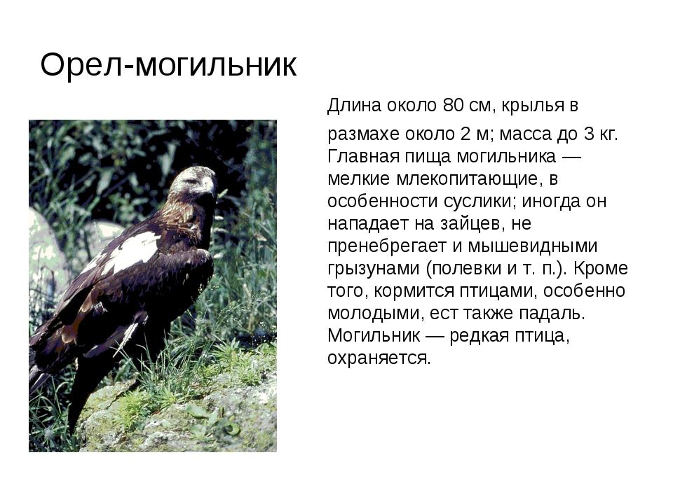 Орел-могильник Длина около 80 см, крылья в размахе около 2 м; масса до 3 кг....