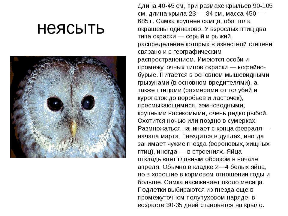 неясыть Длина 40-45 см, при размахе крыльев 90-105 см, длина крыла 23 — 34 с...