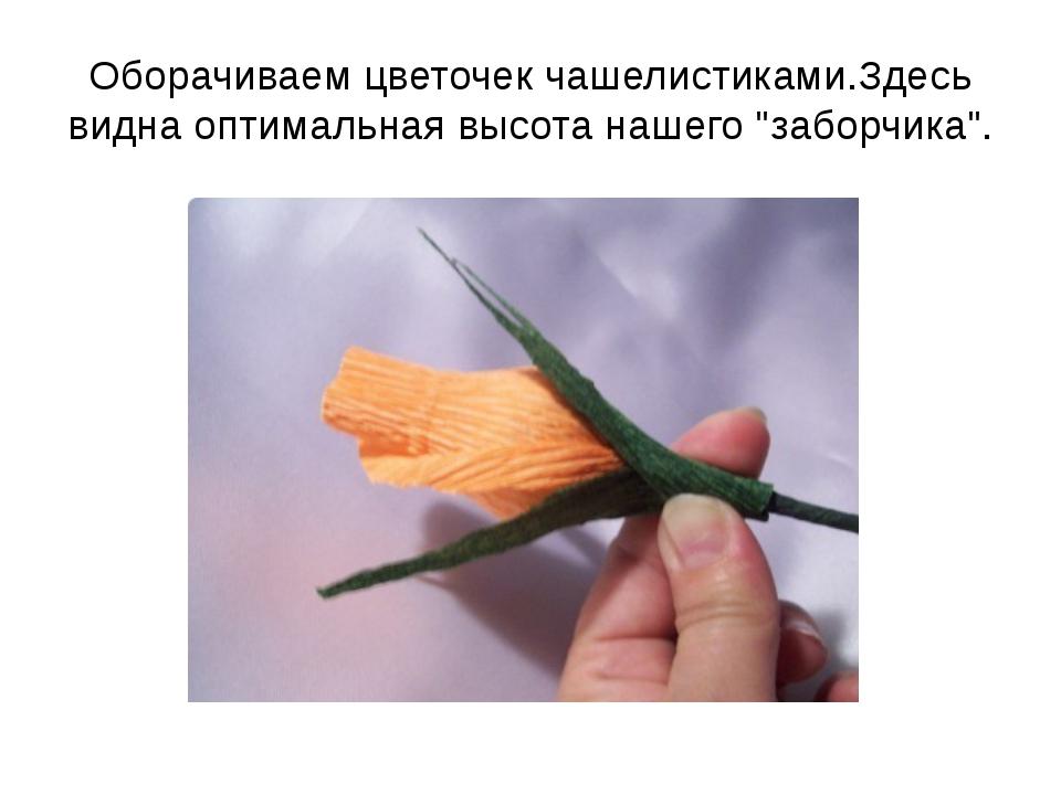 """Оборачиваем цветочек чашелистиками.Здесь видна оптимальная высота нашего """"заб..."""