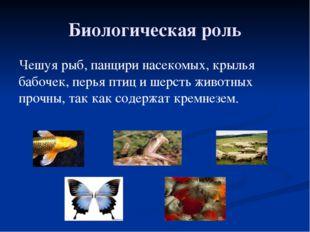 Биологическая роль Чешуя рыб, панцири насекомых, крылья бабочек, перья птиц и