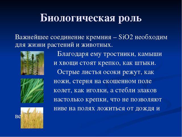 Биологическая роль Важнейшее соединение кремния – SiO2 необходим для жизни ра...