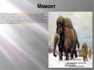 Мамонт Мамонты появились в плиоцене и жили 4,8млн.— 4500 лет назад в Европе