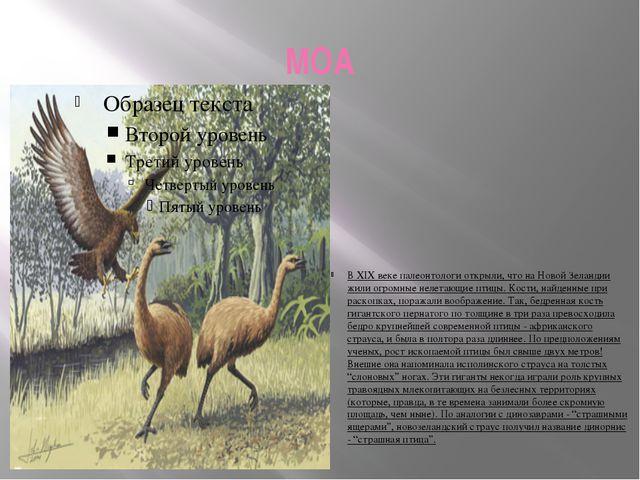 МОА В XIX веке палеонтологи открыли, что на Новой Зеландии жили огромные неле...