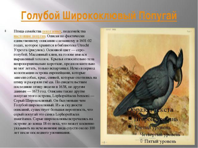 Голубой Ширококлювый Попугай Птица семейства попугаевых, подсемейства настоящ...