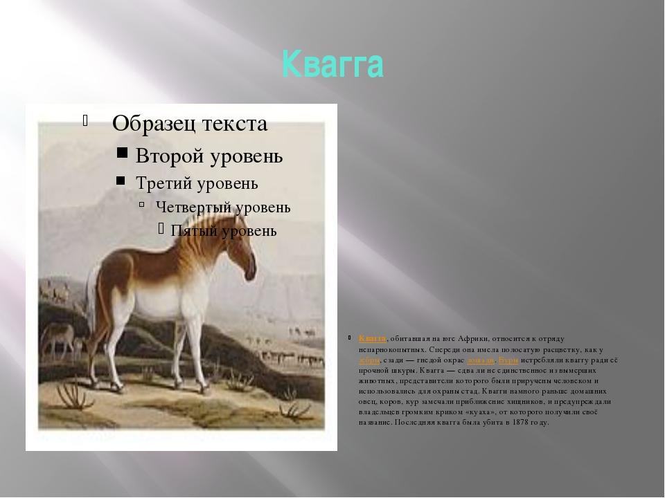 Квагга Квагга, обитавшая на юге Африки, относится к отряду непарнокопытных. С...