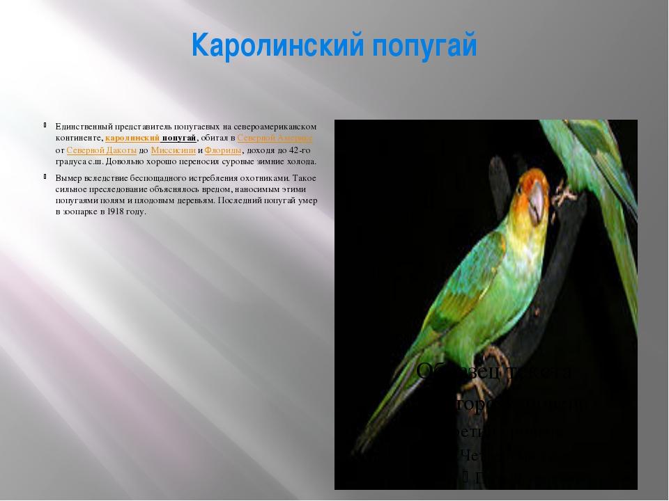 Каролинский попугай Единственный представитель попугаевых на североамериканск...