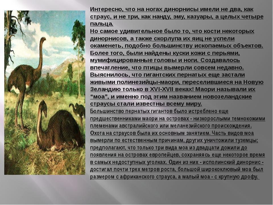 Интересно, что на ногах динорнисы имели не два, как страус, и не три, как нан...