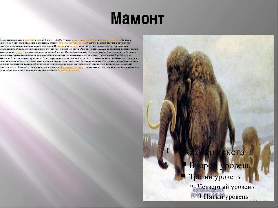 Мамонт Мамонты появились в плиоцене и жили 4,8млн.— 4500 лет назад в Европе...