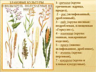 1- гречиха (крупа гречневая: ядрица, продел), 2 – рис (шлифованный, дробленны