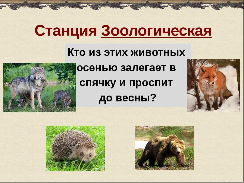 Станция Зоологическая Кто из этих животных осенью залегает в спячку и проспит...