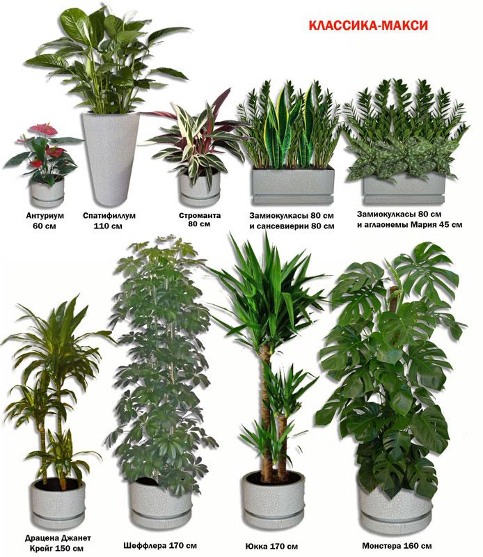 Комнатные растения уход все виды