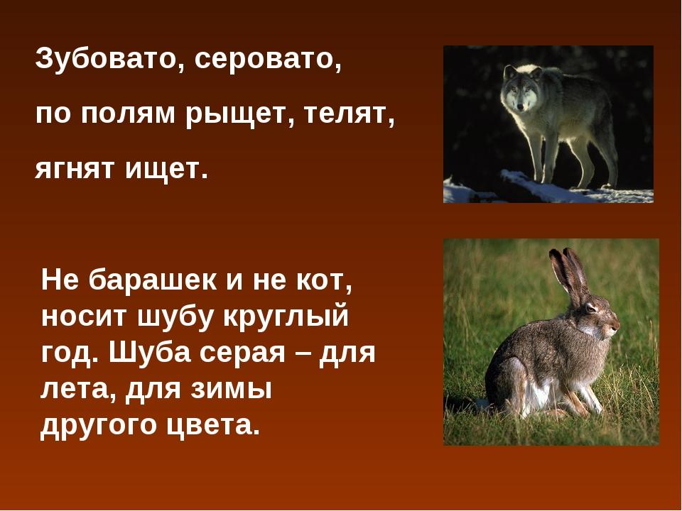 Зубовато, серовато, по полям рыщет, телят, ягнят ищет. Не барашек и не кот, н...