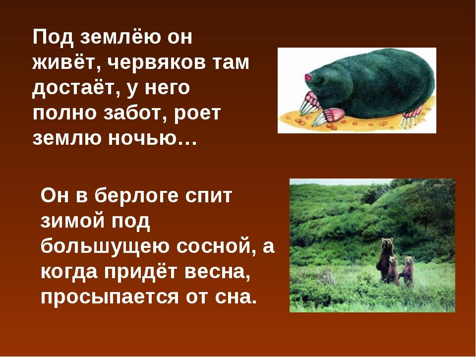 Под землёю он живёт, червяков там достаёт, у него полно забот, роет землю ноч...
