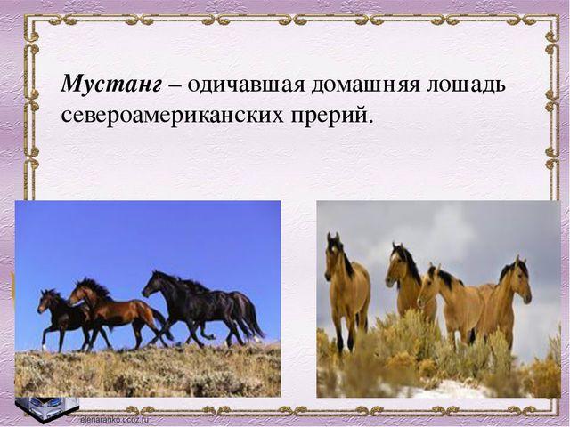 Мустанг –одичавшая домашняя лошадь североамериканских прерий.