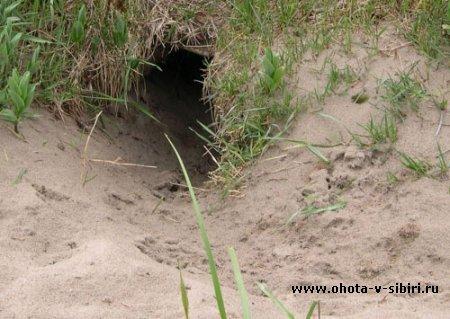 http://ohota-v-sibiri.ru/uploads/posts/thumbs/1292253064_nora.jpg