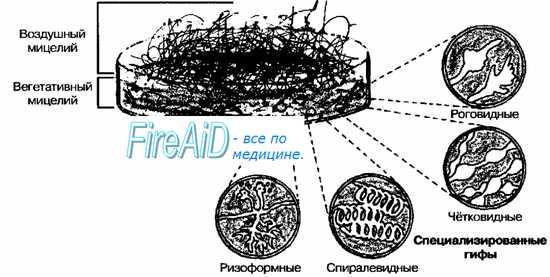 http://meduniver.com/Medical/Microbiology/Img/26.jpg