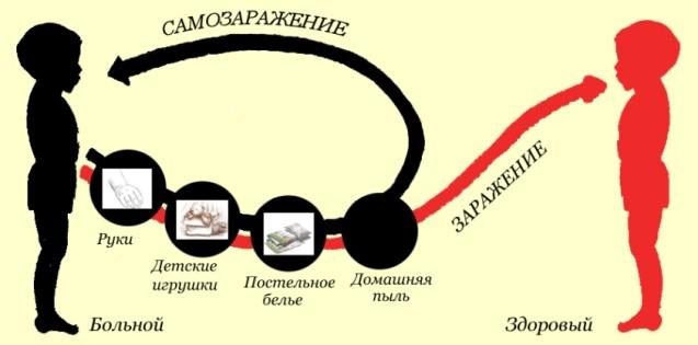 http://maima.com.ua/wp-content/uploads/2010/02/ostritcy.jpg