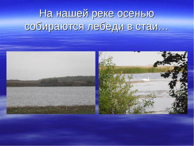 На нашей реке осенью собираются лебеди в стаи…